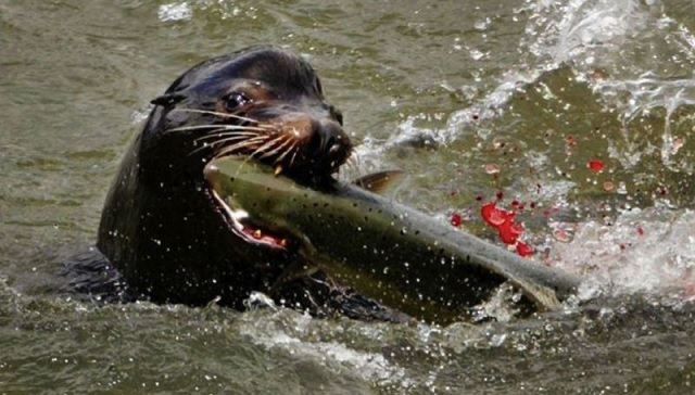 generic sea lion_1530502242905.jpg.jpg