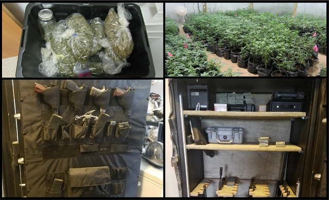 $15M in pot, $557K, 29 guns found in Medford