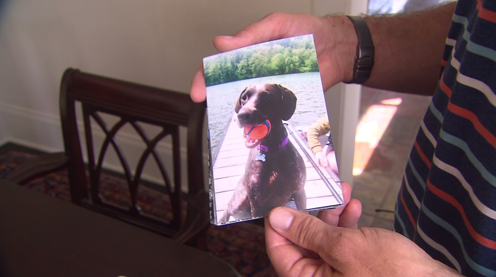 Family dog dies after swimming at Sellwood Park   KOIN com
