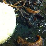 calamares_tinta_koketo_1501