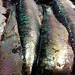 pescado_koketo_153