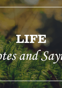 Short Quotes Sayings About Life