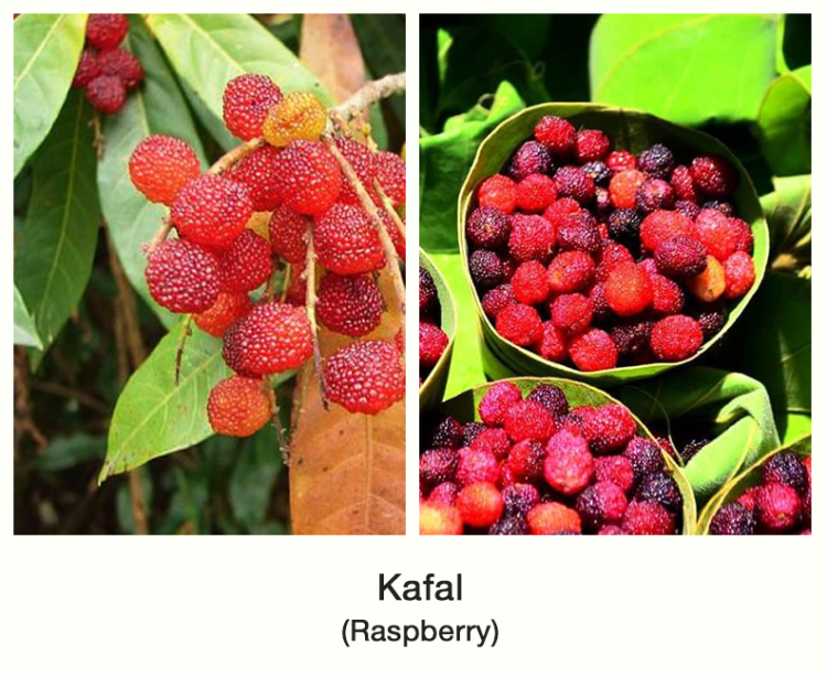 fruit kolti