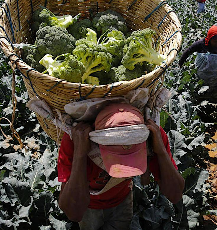 Farmworkers, Farmworker Strike, Familias Unidas por La Justicia, FUJ, Sakuma Brothers Farms, Ramon Torres, KOLUMN Magazine, KOLUMN