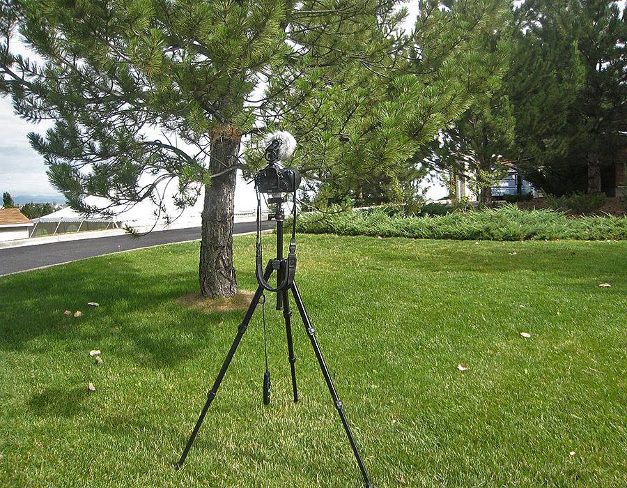 hummingbird nest camera setup 2