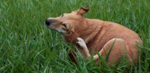 allergie alimentari nel cane