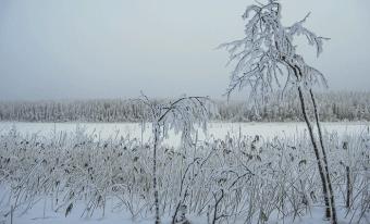 Talvista Hanhijärven rantaa