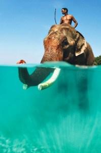 monter sur un éléphant
