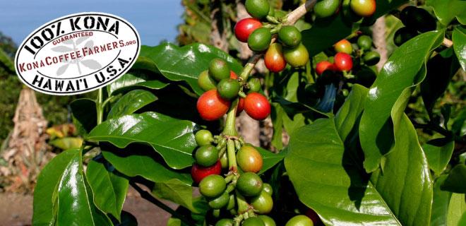 Image Result For Coffee Kailua Kona