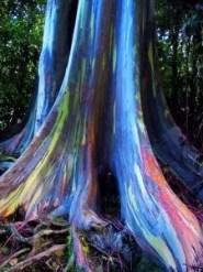 tęczowe drzewa