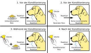 Pawlowscher Hund - Bildquelle: Wikipedia / MagentaGreen; Namensnennung – Weitergabe unter gleichen Bedingungen 3.0 nicht portiert