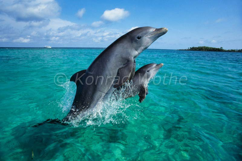 Karibik Moments Of Nature Konrad Wothe