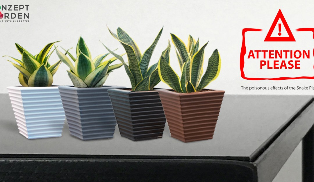 Be Careful Grow & Why You Should Have A Snake Plant In Your Home