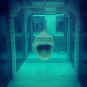 Damien Hirst - Shark