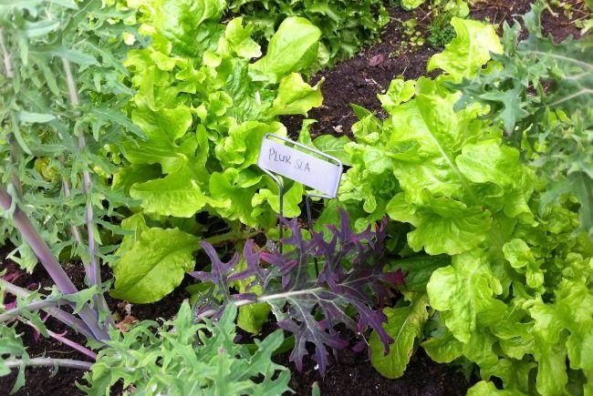 Stappenplan voor een eetbare tuin