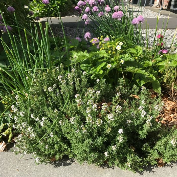 Kruiden in de tuin | plantjes of zaad en welke soort?
