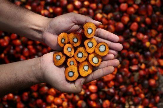Palm Yağı'nı Hepimiz Tüketiyoruz: Kolesterol, Kalp Krizi, Felç & Obezite