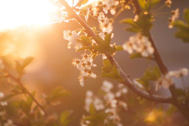 Bahar'ın Müjdecisi, Doğa'nın Yeni Yılı, Doğu Medeniyetlerinin Bayramı: Nevruz