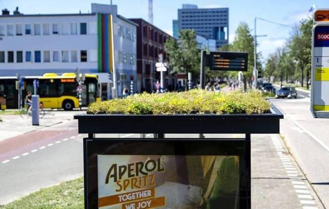 Hollanda'da Otobüs Durakları Arı Yuvasına Dönüştürüldü