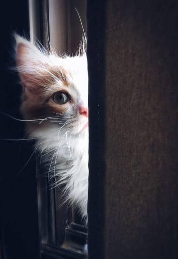 Kedi Sahibi Olmanın Sağlığımıza 5 Faydası