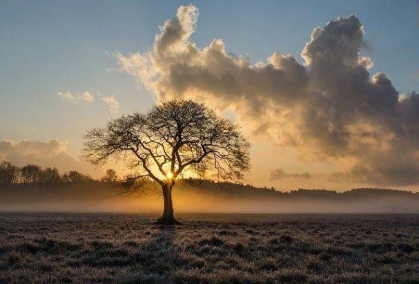 doğadan uzaklaşan insan betimlemesi bir ağaç
