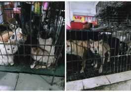Çin Akıllanmıyor: Canlı Hayvan Pazarları Yeniden Açıldı!