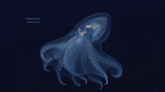 Mariana Çukuru ekosisteminde yaşayan canlılar