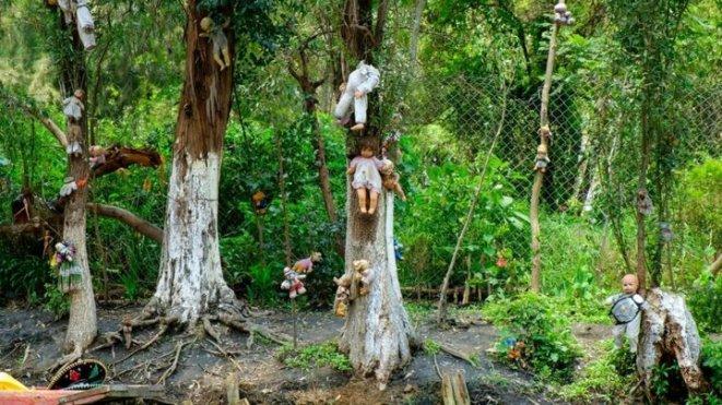 Ormandan bir görsel