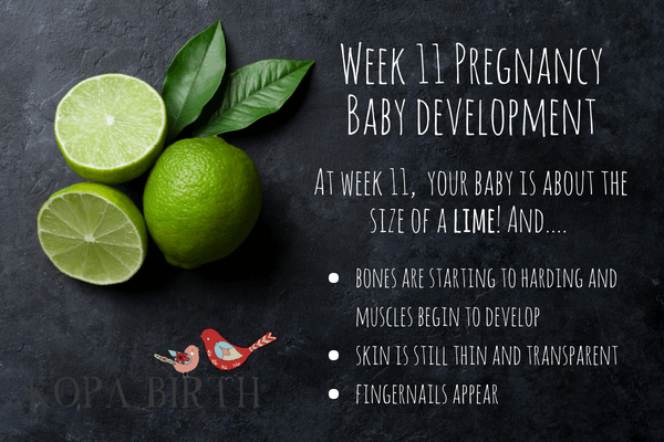 Week 11 Pregnancy Fruit