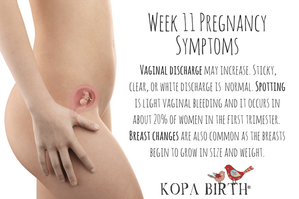 Week 11 Pregnancy Symptoms