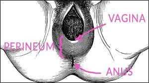 The perineum is the area between your vagina and anus