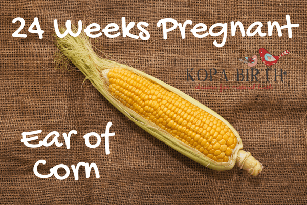 week 24 pregnancy fruit corn