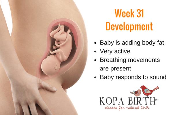 week 31 pregnancy baby development