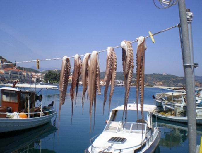 htapodi-octopus-gytheio