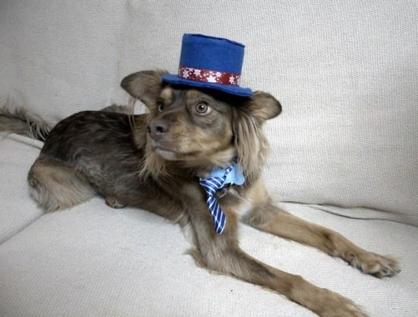 Ο Δίας με καπέλο και γραβάτα εικόνα