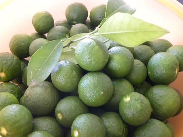 Nerantzakia green bitter oranges image