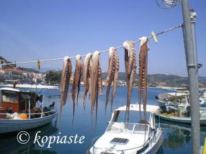 octopus drying image