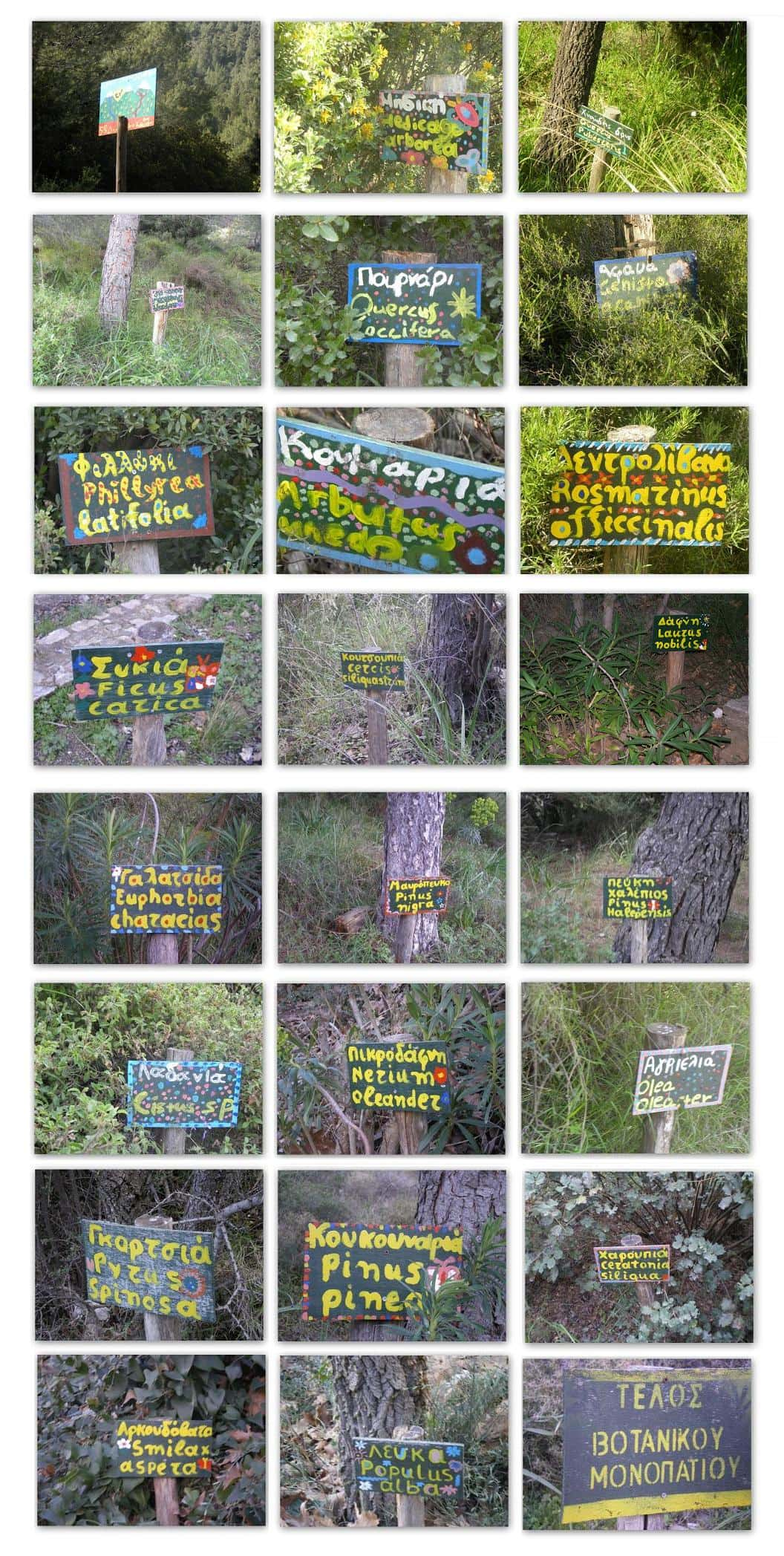 Collage Hymettus Botanical trail