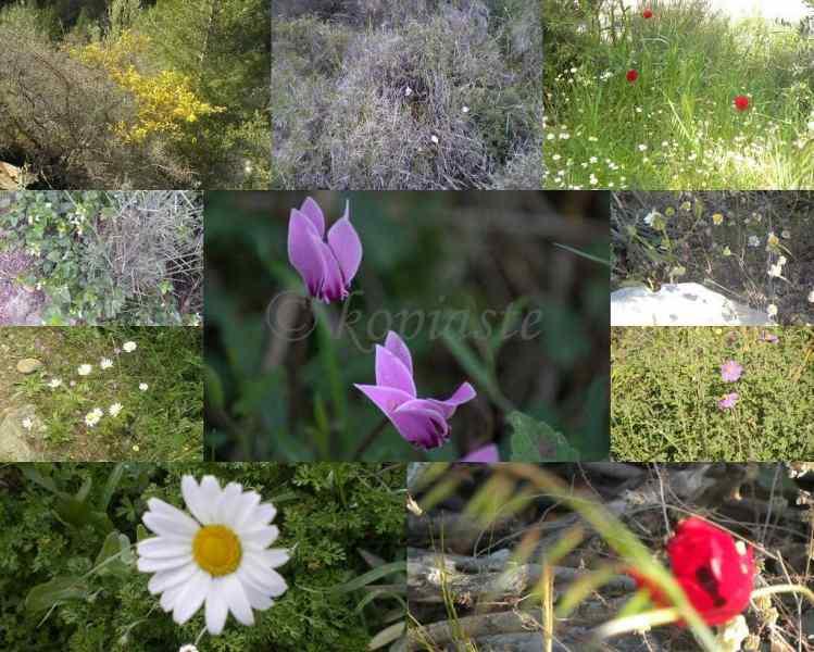 Collage wild flowers