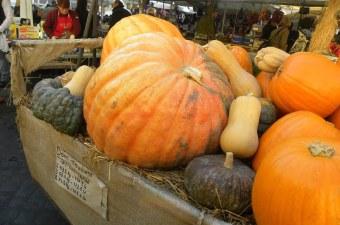 pumpkins picture