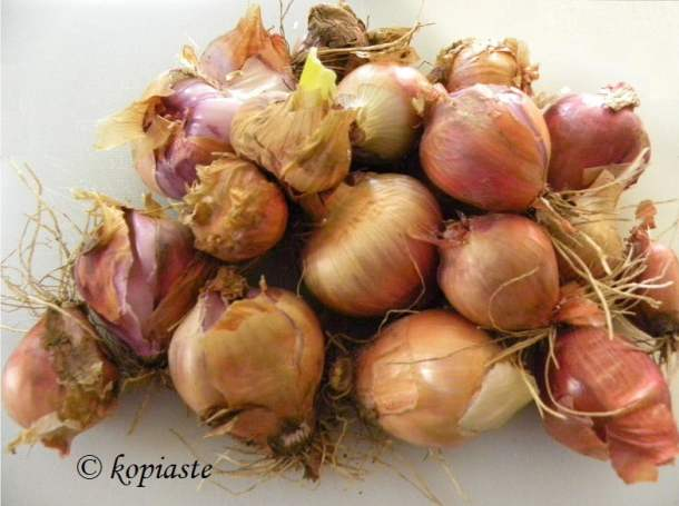 onions from our garden