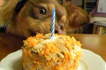 Dias' first Carrot Cake