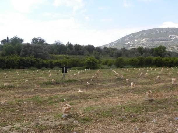 grafting trees