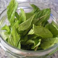 Mint PestO for Ovarian Cancer