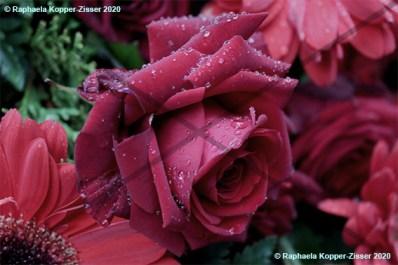 Friedhof_Blumen_2_Raphaela_Kopper-Zisser_2020