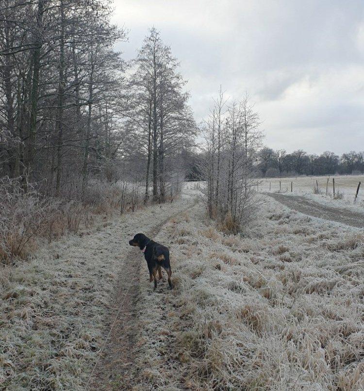 17 år…. och härlig vinterfrost