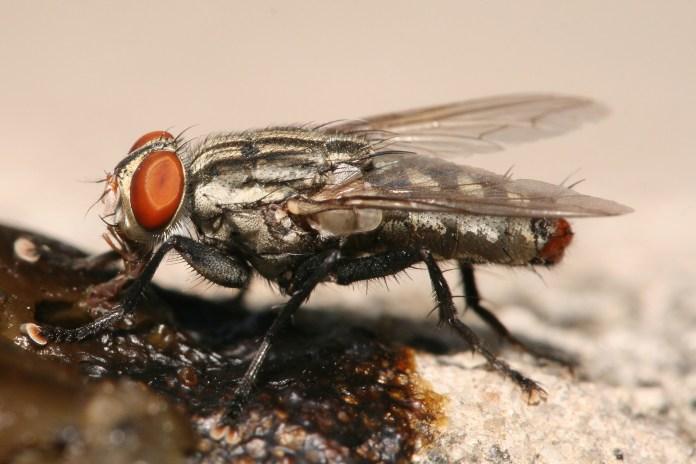 Tips Ampuh Mengusir Lalat di Rumah