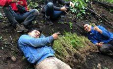 Permalink to Tiga Hektare Ladang Ganja Ditemukan di Kota Pagaralam