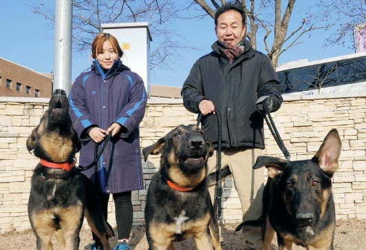 A professor and student from Daekyeung University train the three German Shepherds cloned from the heroic search and rescue dog Trakr, who saved the last survivor in the Sept. 11 terrorist attacks on the World Trade Center. Korean stem cell researcher Hwang Woo-suk donated three puppies harvested using Trakr's DNA to the university in North Gyeongsang so that they can also be trained to become rescue dogs. [DAEKYEUNG UNIVERSITY]