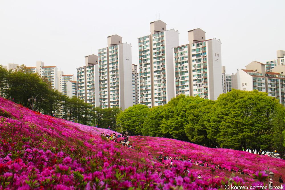 festivals printaniers incontournables en Corée : Gunpo Royal Azalea Festival